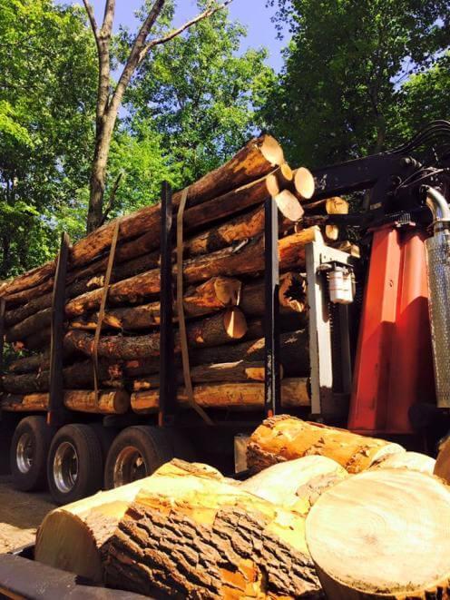 logging.jpg